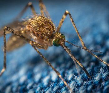 Απεντόμωση - Κουνούπι